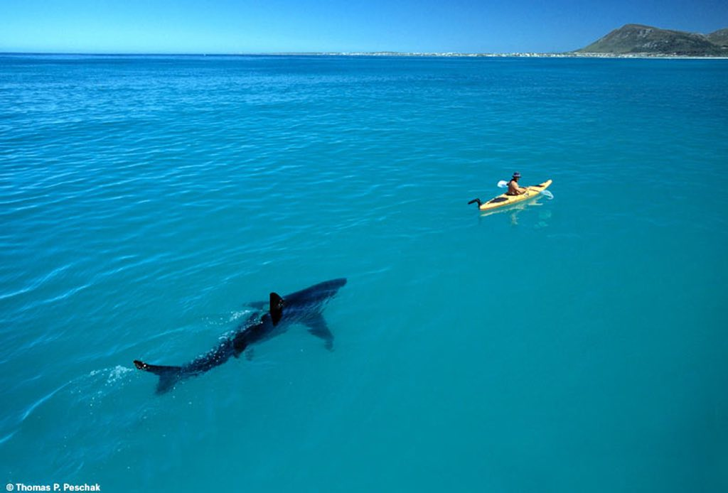 What you think you know – may hurt you when it comes to recruiting (man in kayak chased by shark, source avventureviaggi.com / © Thomas P. Peschak)